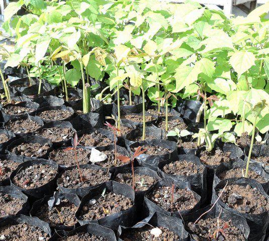 consejos preparacion y plantacion etc
