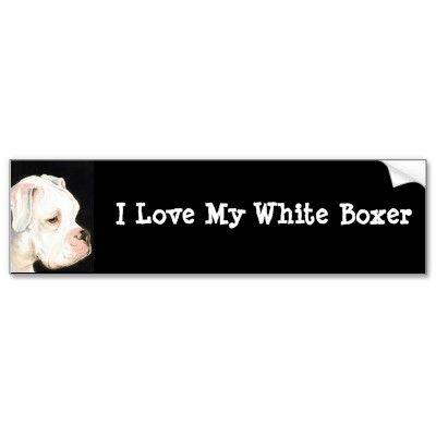 I Love My White Boxer Dog Art Bumper Sticker by CharlottesWebArt