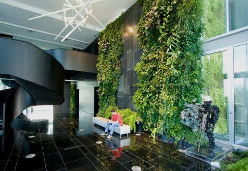 Money Plant Indoor Hanging Planters