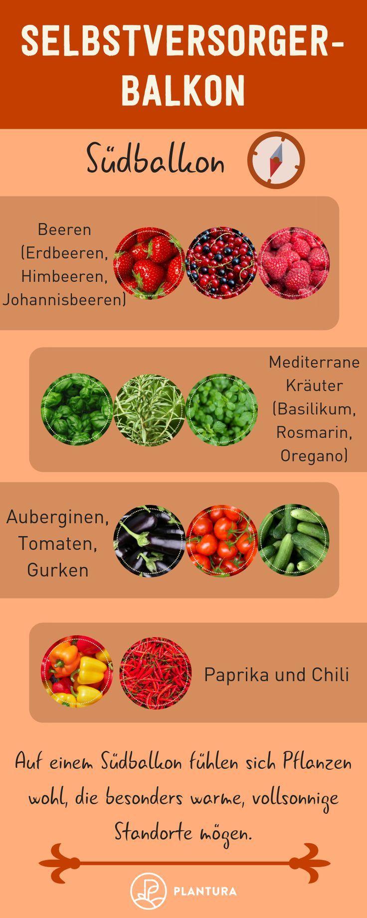Selbstversorger-Balkon: Welche Pflanze für welchen Balkon? – Albina Kertzmann
