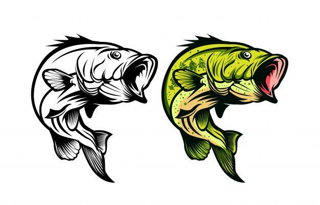 Bass Fish Fishing Vector Illustration Vector Illustration Fish Graphic Fish Vector