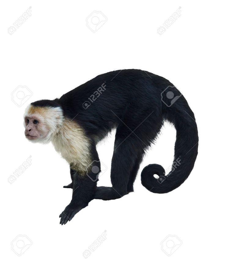 Image Result For Critter Control San Antonio