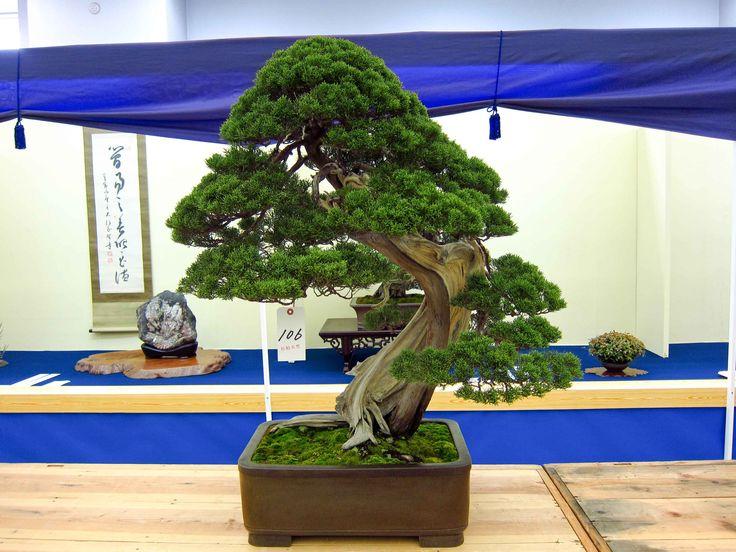 1807 best Bonsai images on Pinterest | Bonsai trees, Bonsai and ...