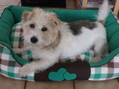 Cuccia verde per cani, stile campagnolo #CucciaVerde #Cuccia #Cane http://www.principini.it/prodotti/cani/cucce-cani/cuccia-verde-e-marrone-per-cani