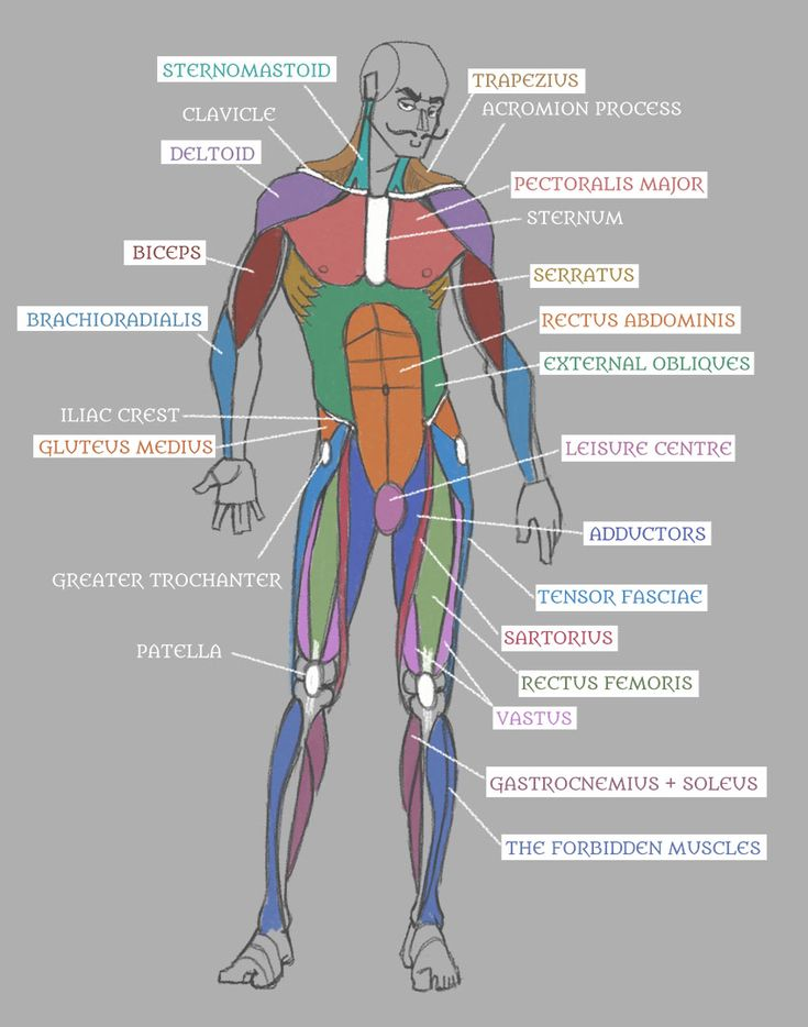106 best anatomy images on Pinterest | Human anatomy, Human body and ...