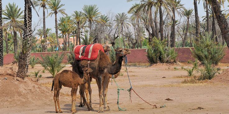 Vacaciones en pareja para descubrir Marruecos