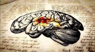 мозг8