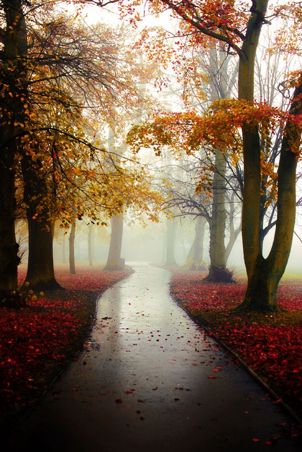 In the entire circle of the year there are no days so delightful as those of a fine October, when the trees are bare to the mild heavens, and the red leaves bestrew the road, and you can feel the breath of winter, morning and evening—no days so calm, so tenderly solemn, and with such a reverent meekness in the air. ~Alexander Smith