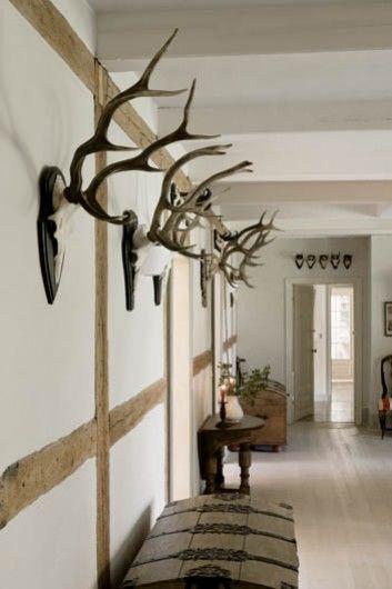 Antlers displayed.