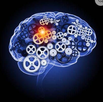 Información recogida por la fundación belen. El instituto fay debe su nombre a Temple Fay, un neurocirujano y neurólogo estadounidense que pensaba que los niños con lesión cerebral grave no reciben los estímulos suficientes para realizar algunas funciones.