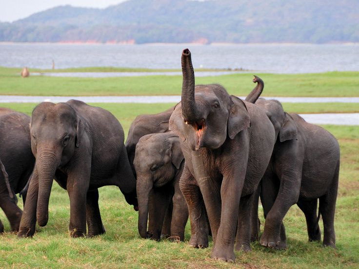 This remarkable tour package helps you to discover the wildlife, flora, golden sandy beaches as well as the historic cultural and architectural marvels of the island during the journey. Adventures safaris in the largest national park; Wilpattu and the second largest and most visited national park; Yala, will fulfill your enthusiasm of wildlife watching. You will be guided to visit four UNESCO world heritage sites namely, Anuradhapura ancient city, Sigiriya rock fortress Kandy and Gall Dutch…