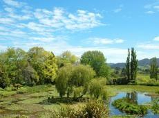 Waihi Waterlily Gardens, New Zealand