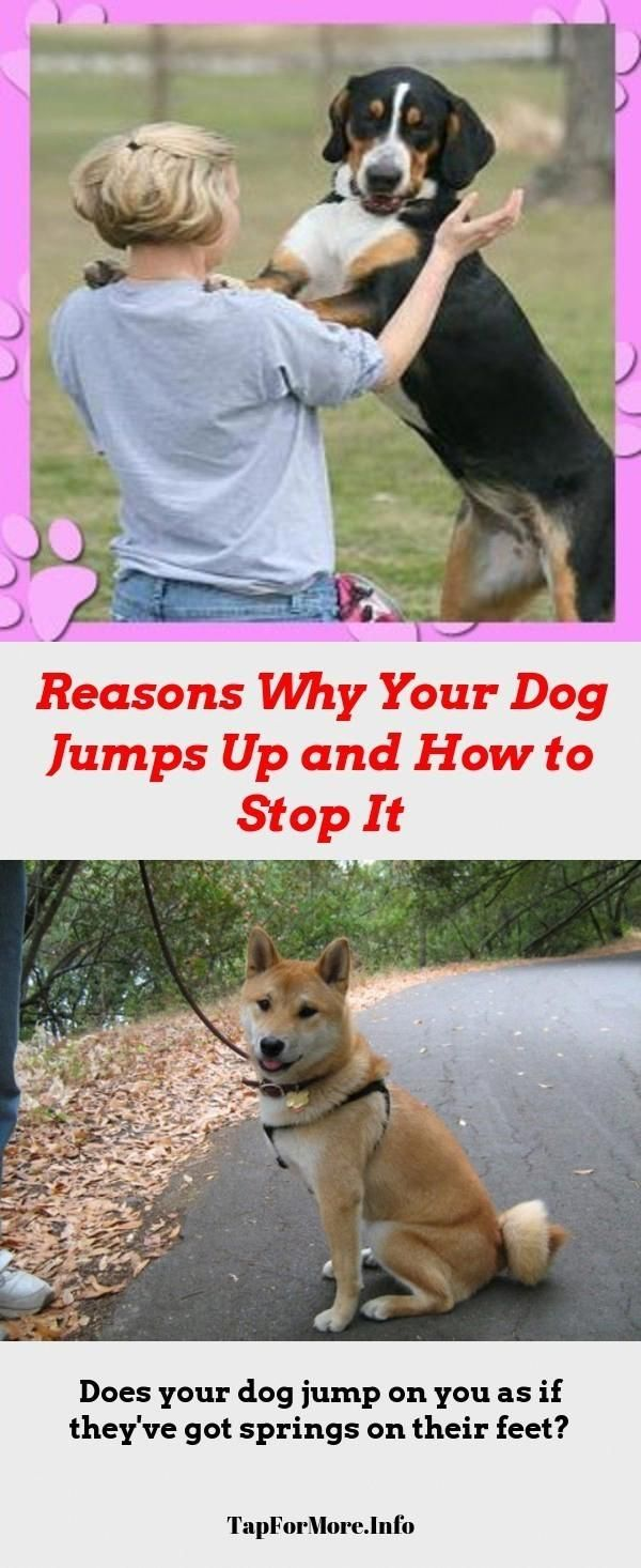 Stop Dog Jumping And Alpha Dog Training Check The Image For