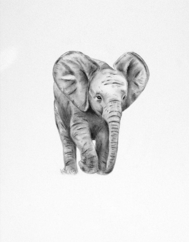 Pencil Drawings Of Baby Elephants elephant art original charcoal drawing of baby by jaclynsstudio