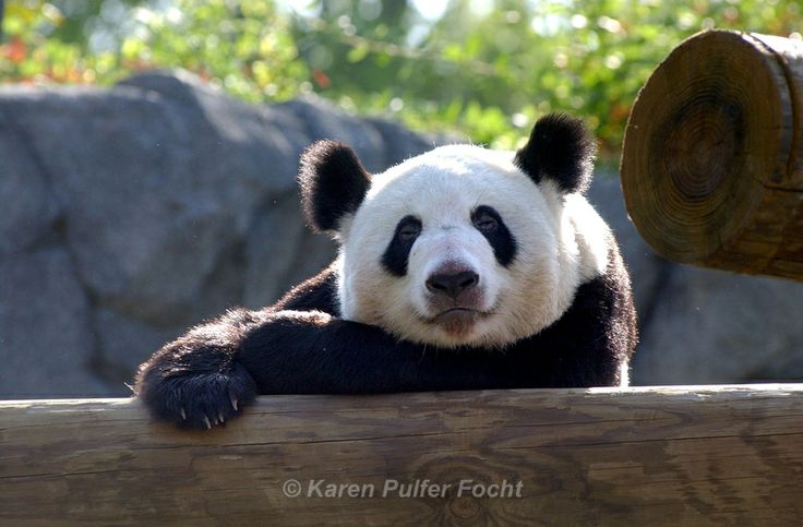 The Memphis Zoo has over 3,500 animals who call it home. It is the perfect size, big enough to have quality exhibits, including Pandas. Small enough to do in a reasonable amount of time.