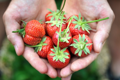 One cup of strawberries (about eight medium-sized berries) yields 150 percent daily value (DV) of vitamin C. That's a lot of vitamin C for only 50 calories.