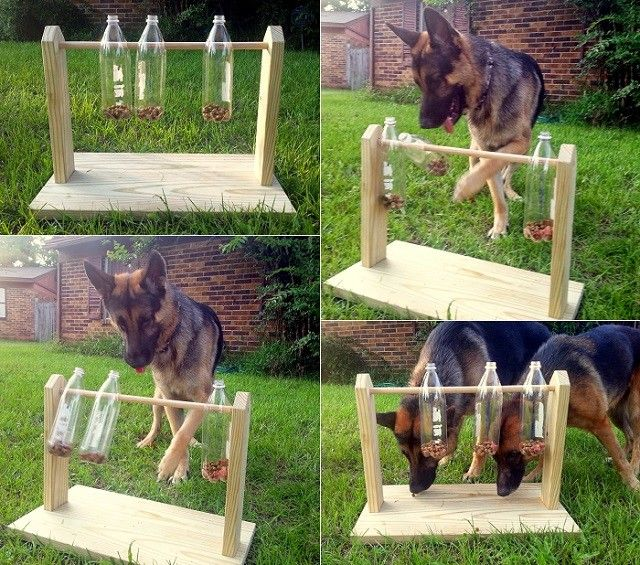 DIY Spinning Plastic Bottle Dog Treat Game