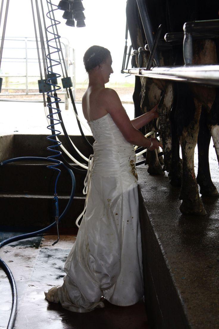 Milking cows. Trash my wedding dress. New Zealand