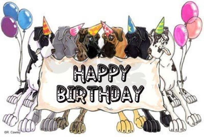 Happy 9Th Birthday Harvey! - Senior Great Danes - Great Dane Owners ...