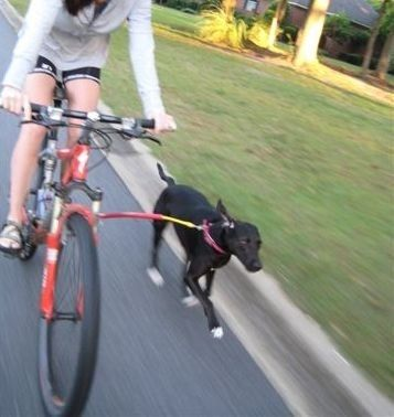 1-Running-Dog Bike Tow Leash, $146.00 - This is so cool. Would probably be better than the WalkyDog for dogs that are pullers.
