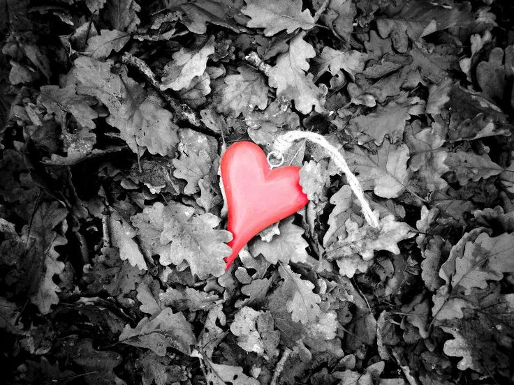 Love Colour Splash by sparkart  Colour splash red heart on top of a bed of black and white leaves.