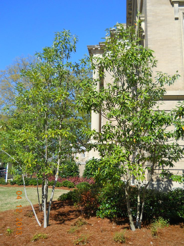 Front Yard Garden Ideas Curb Appeal Plants