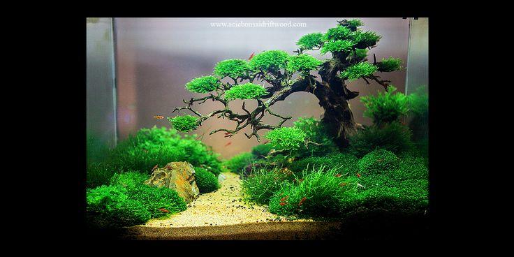 Bonsai Driftwood Best Used For Aquarium Nature Aquarium