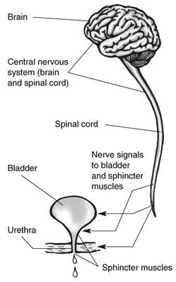 Bladder Control Issues related to Nerve Pain - Explanation, What to Do, Etc.