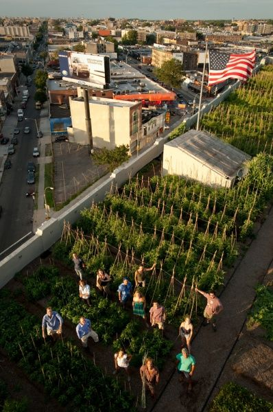 Brooklyn Grange rooftop farm is technically over the border in Queens.  Amazing image.