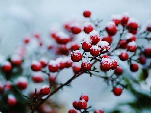 ポンポン山の森から Winter Sumi-e