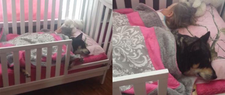 Descubre a su bebé y a su perro durmiendo juntos la siesta