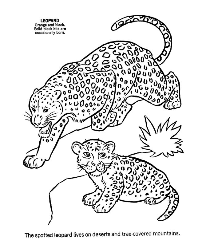 Male And Female Leopard Coloring Page