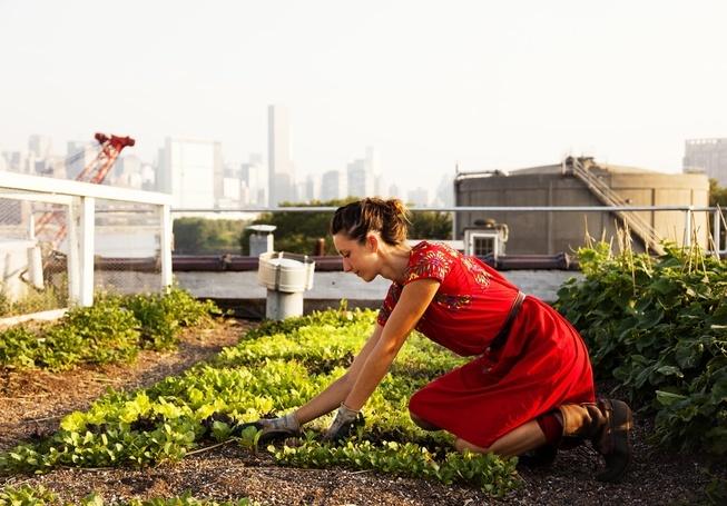 Luomufarmi kerrostalon katolla Brooklynissä.