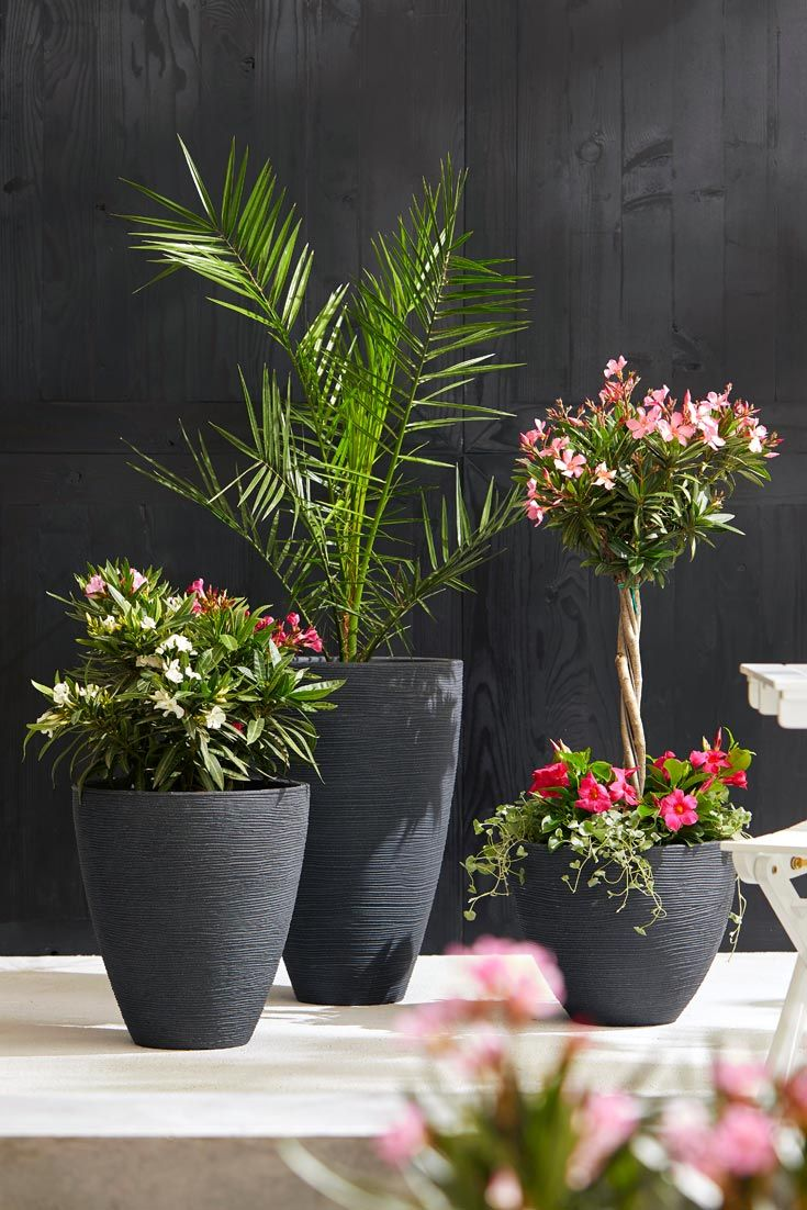 Schicke Kombi Oleander Palmen Palmen Garten Pflanzideen Terrasse Bepflanzen