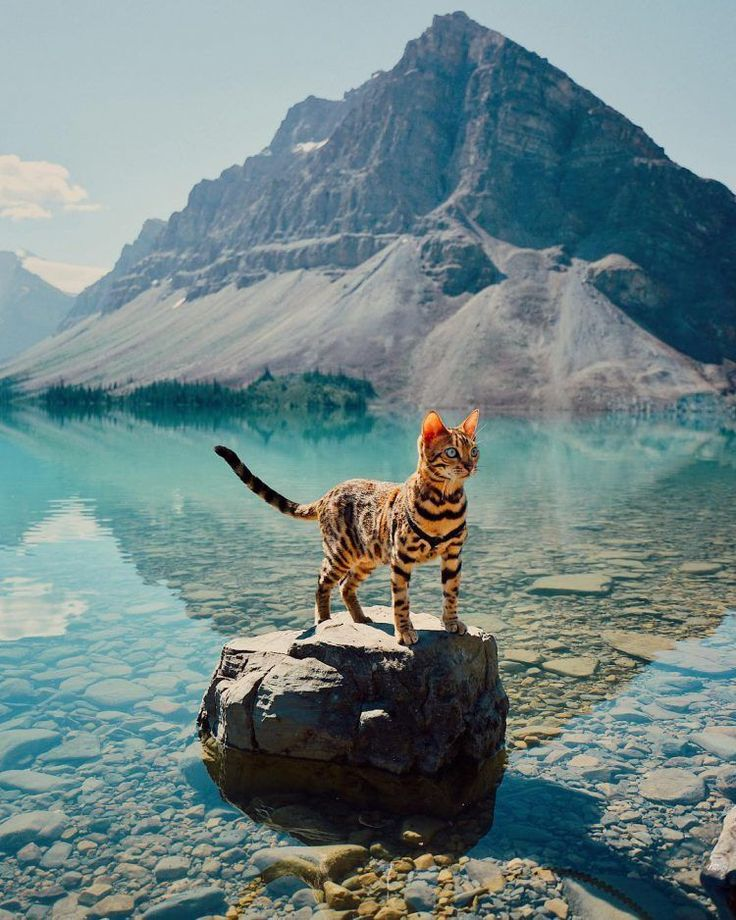 A Majestic Green Eyed Bengal Cat Who Enjoys the Great Outdoors With Her Beloved Human