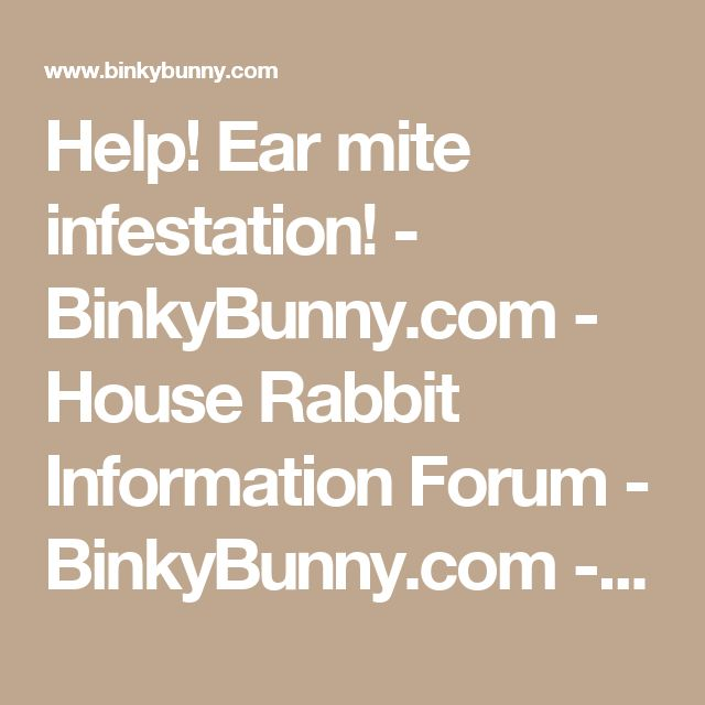 Help!  Ear mite infestation! - BinkyBunny.com - House Rabbit Information Forum - BinkyBunny.com - BINKYBUNNY FORUMS - DIET & CARE