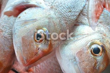 Snapper, a day's catch Royalty Free Stock Photo