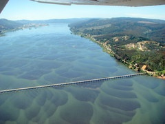 Panoramio - Photo of Puente sobre Rio Bio Bio, Concepción, Chile - my house use to look out onto the Bio Bio. I was 8 at the time and spoke fluent Spanish, my regret is that I never kept it up, so it has faded. I understand better than I can speak it now :0(