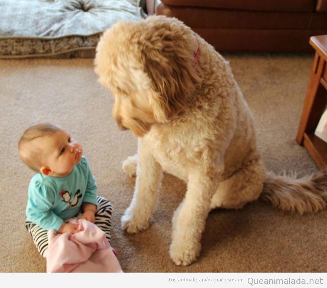 Bebé mirando perro