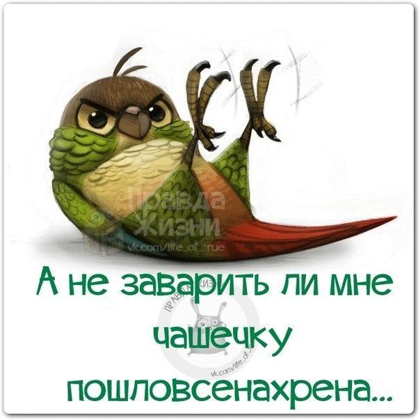 https://pp.vk.me/c540109/v540109334/f73/7zu5DHuABxQ.jpg
