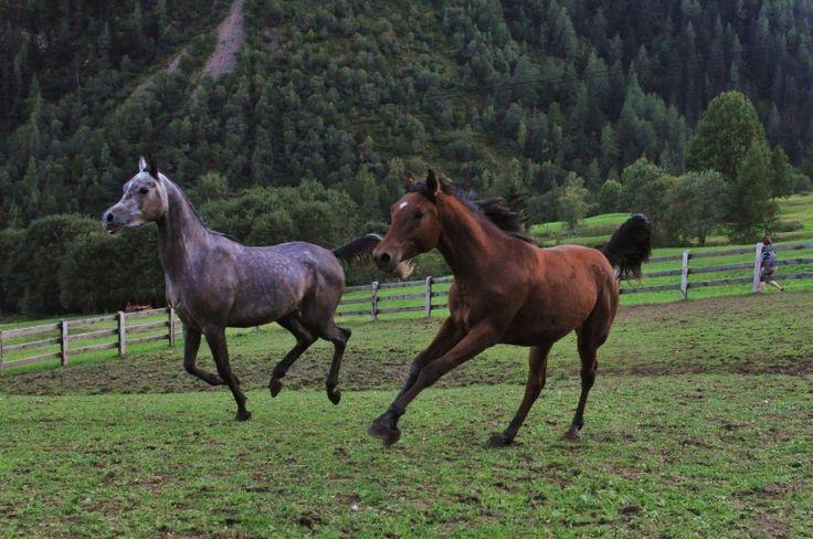 """Lui, lei e la montagna. Pino e Agnese sono """"montanari"""" per scelta, prima ancora che per nascita. Amano i loro monti e amano la loro vita in compagnia di mucche, capre, cavalli e il cagnolino Lucky."""