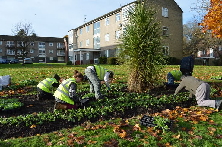 Brightening up the flats in Shipley with flowerbeds