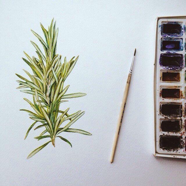 Rosemary  Watercolor