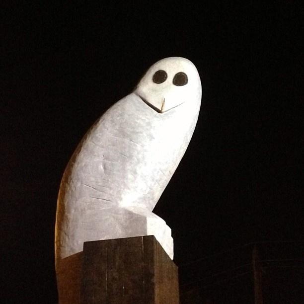 Good morning Mr Owl