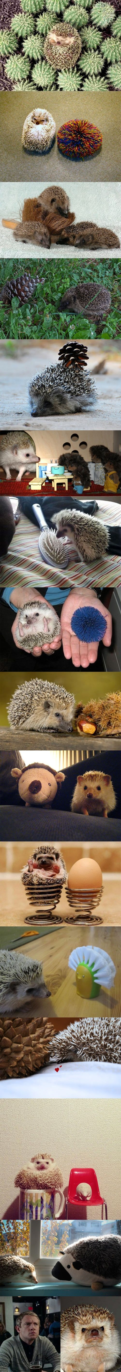 A hedgehog's life.   CLICK THIS PIN to visit my DAILY TOP 10 PINS!