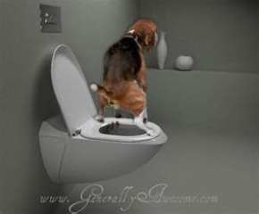 Do you know how to train your puppy?Click the link and you will find some interesting tips that can make easy the toilet  training journey