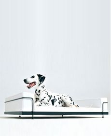 Dog Sofa inspired by Le Corbusier