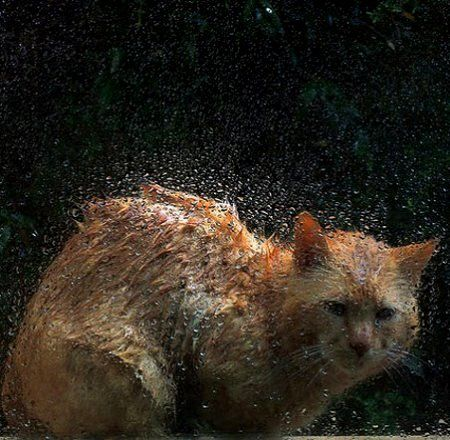 Image result for cat wet under rain