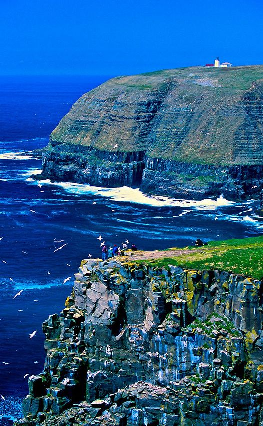 .~Cape St. Mary's Ecological Reserve, Avalon Peninsula ~ Newfoundland, Canada~.
