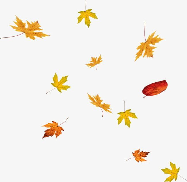 Floating Falling Maple Leaves Png Free Download Leaf Clipart Maple Leaf Fall